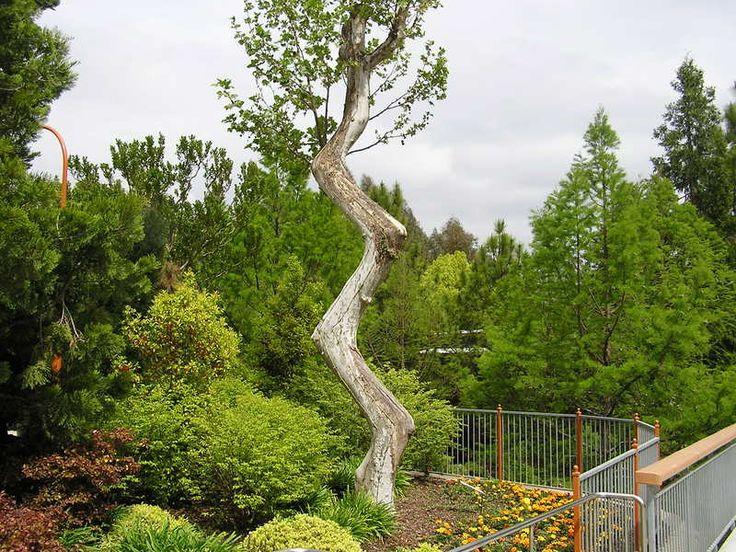 Zigzag Tree
