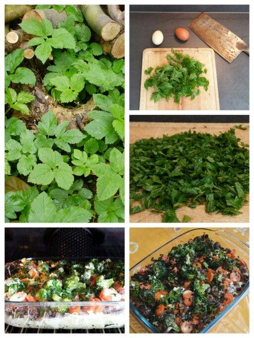 ☆ GROENTESCHOTEL MET ZEVENBLAD Ingrediënten: - aardappels en kerrie voor aardappelpuree - gehakt - broccoli en wortel Voor het mengsel: - een handvol jong zevenblad - crème fraiche - melk - 2 eieren - geraspte kaas - peper en zout Bereiding: Oven op 180°. Maak aardappelpuree met kerrie en bak het gehakt rul en op smaak. Snijd de groente in stukjes en gaar het. Was de zevenblad goed en hak het fijn. Maak een mengsel. In de ovenschaal: puree - gehakt - groente - mengsel. Schotel in 20 minuten…