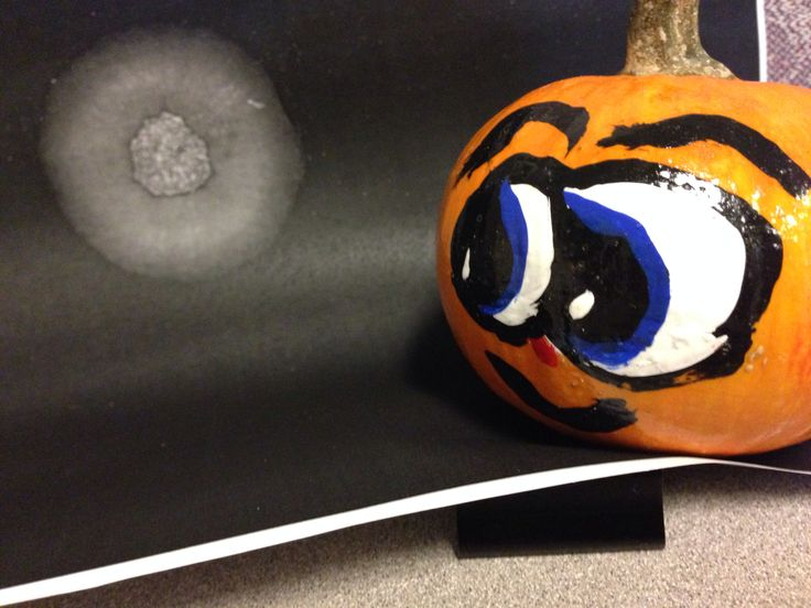 Fun office pumpkin pictures - does this make my butt look big?