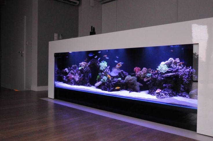 Click This Image To Show The Full Size Version Saltwater Aquarium Fish Tank Wall Aquarium