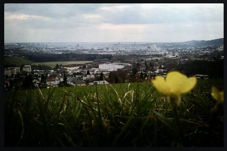 Linz mit Blume.