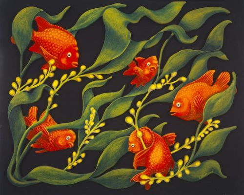 Garibaldi Fish Drawing Images