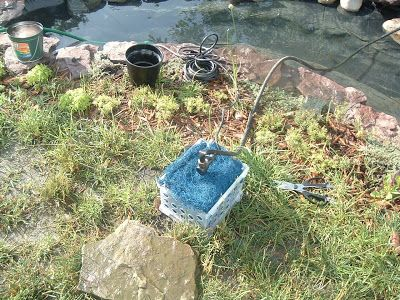 Top 25 ideas about garden fish pond on pinterest gardens for Best fish to put in a pond