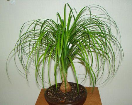 plantas de sombra para interiores de florecer cortar las puntas de las
