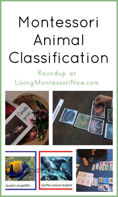 Montessori animal classification activities and resources, including links to lots of free Montessori animal classification printables