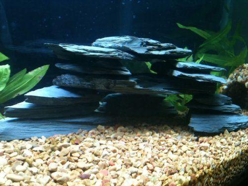 Slate Aquarium Cave Cichlid 100 Pet Lovers Ads