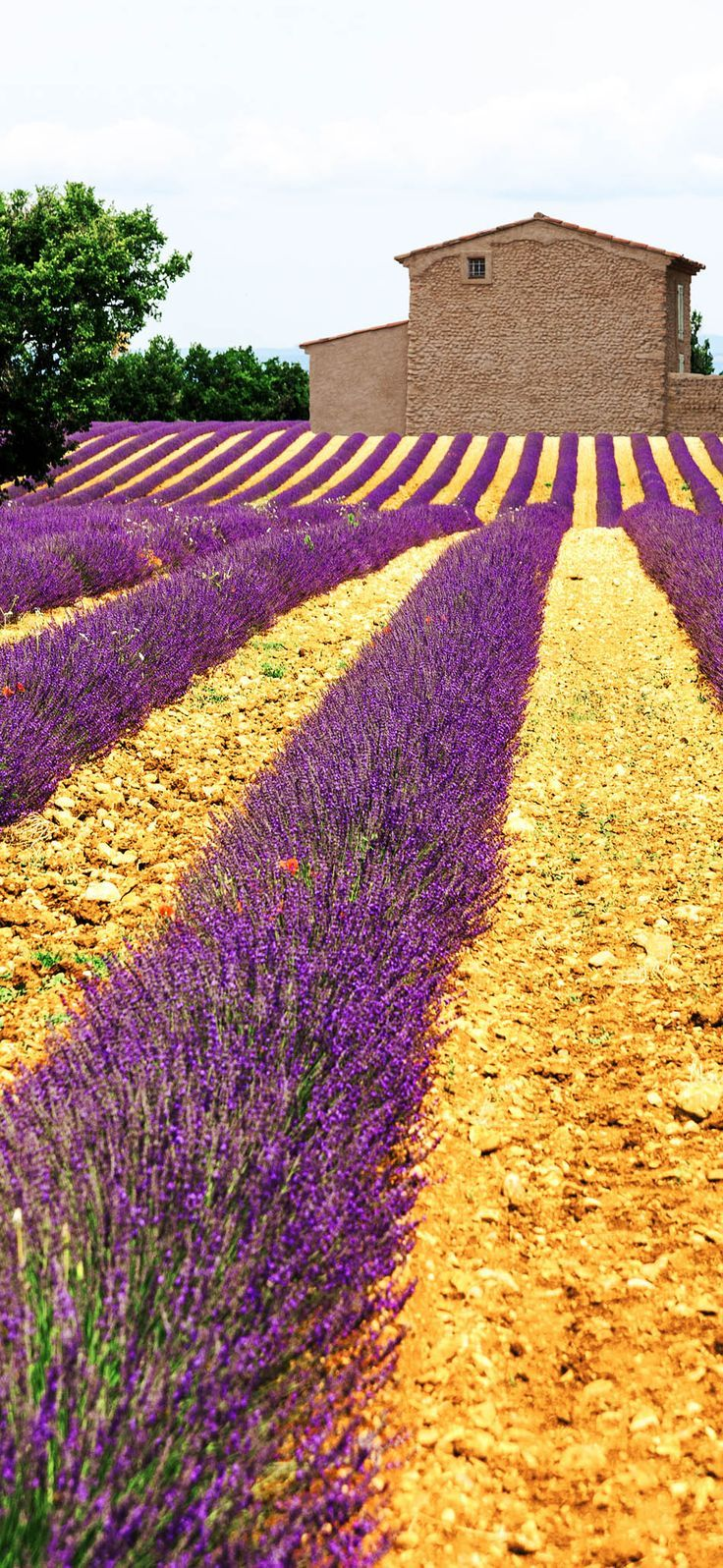 Amazing Lavender Field in Provence, France #summer #travel