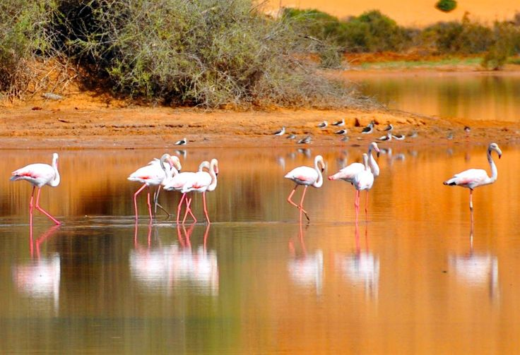 Moulay Bouseelham: pronti al birdwatching?
