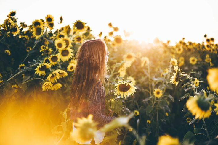 Let's follow the sun! #sunflowers #photography #inspiration #shooting #ideas – Misha