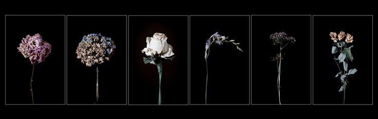 Dead Flowers Blog