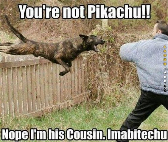 Can't decide if I love the picture or the caption more... |Humor||LOL||Funny photos||Funny memes||Dogs||Pikachu funny|