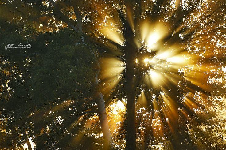 light by Milko Marchetti on 500px