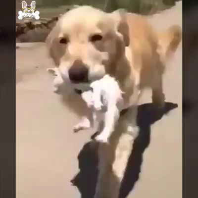 So Sweet Dog