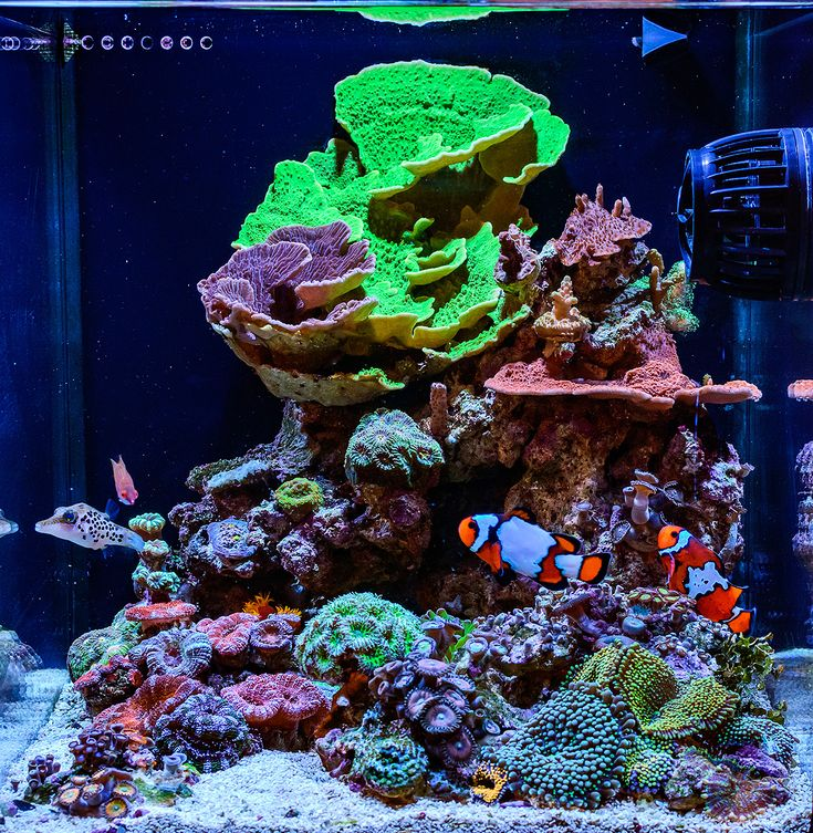 teenyreef Congratulations to community member teenyreef and his 10 gallon reef aquarium for being selected for our August Reef Profile! This nano reef aquarium is home to some very unique specimens including a rare Leopard Toby pufferfis...