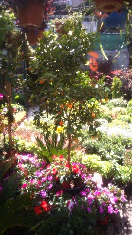 Sera botanic garden,Etiler, Istanbul
