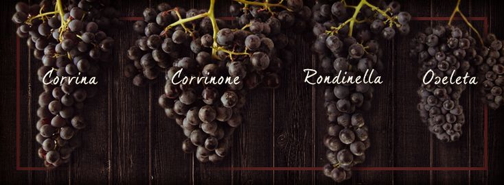 The beautiful grapes that go into some of Allegrini's finest wines.