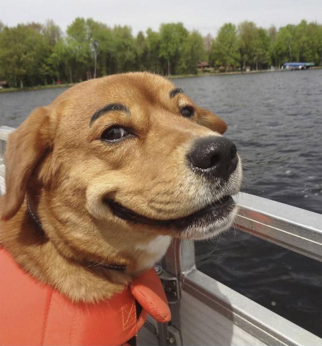 Hunde mit Augenbrauen #1