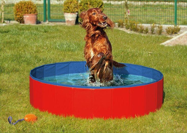 #hortadendauw #kuurne #Doggypool #zwembad voor #honden  #fun #doggyfun