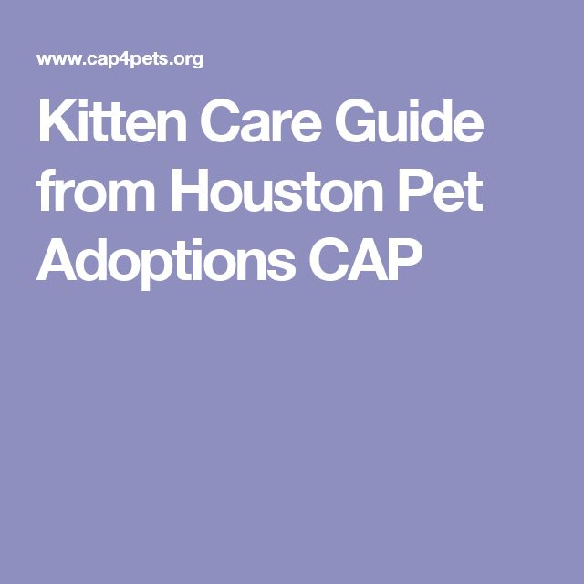 Kitten Care Guide from Houston Pet Adoptions CAP
