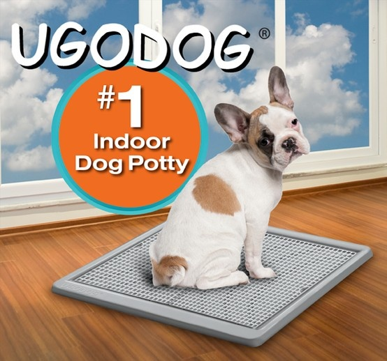 How To Stop A Indoor Dog From Barking Indoors
