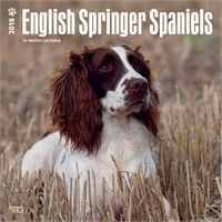 Springer Spaniels Calendar 2017: Nothing beats the exceptional look and quality of our Springer Spaniels… #USAOnlineShopping #USAShopping