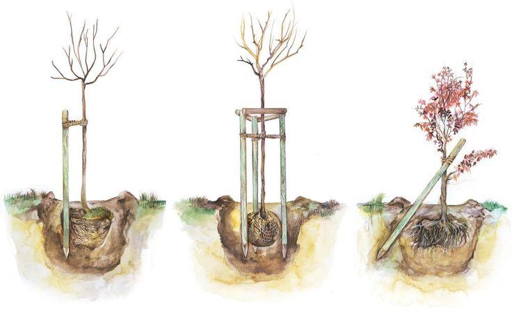 Die gängigsten Stützmethoden für Bäume: senkrechterPfahl (links),Dreibock (Mitte) und schräger Pfahl (rechts)