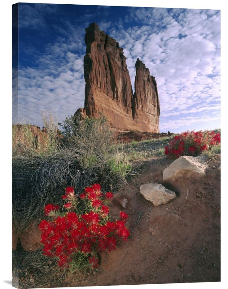 Buy Feng Shui Wall Art Photo Paintbrush and the Organ Rock, Arches National Park, Utah