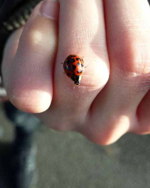 Voilà Pippi: LIEVEHEERSBEESTJE | HET LAATSTE GEBED IN MIJN HUIS #kids #insect #blog