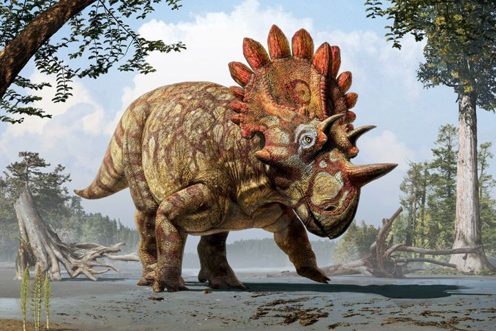 Regaliceratops peterhewsi.  Art by Julius T. Csotonyi. Courtesy of Royal Tyrrell Museum, Drumheller, AlbertaAlberta's Royal Tyrrell Museum has unveiled a new species of horned dinosaur it's calling Hellboy.  Museum officials say the new species with bizarre armour-plating has two horns sticking out over its eyes just like the comic book and movie character.