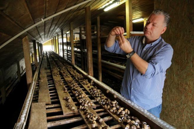 Ferma ślimaków Snails Garden w Krasinie koło Pasłęka (tw/mr) PAP/Tomasz Waszczuk