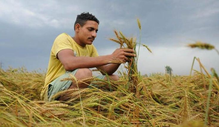 For farmers, proving that there has been 40% crop damage has so far been a tedious process which often delayed the insurance pay offs. Read this full article on hindustantimes.com