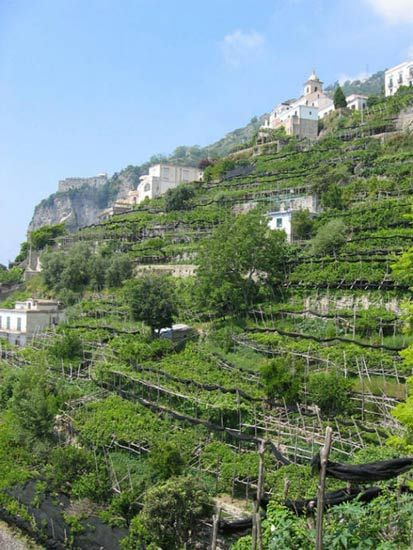 amalfi vegetable gardens on the side of the hill this has to be one of