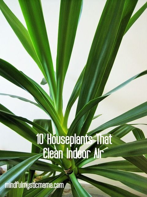 In the late 1980s, NASA researched indoor plants to see if they would cleanse the air in tightly-sealed space stations. The good news is, you can benefit from their discoveries in your home. It is...