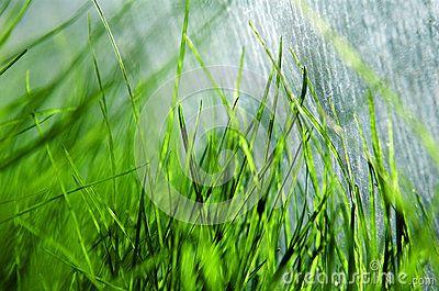 Fresh green spring grass in greenhouse