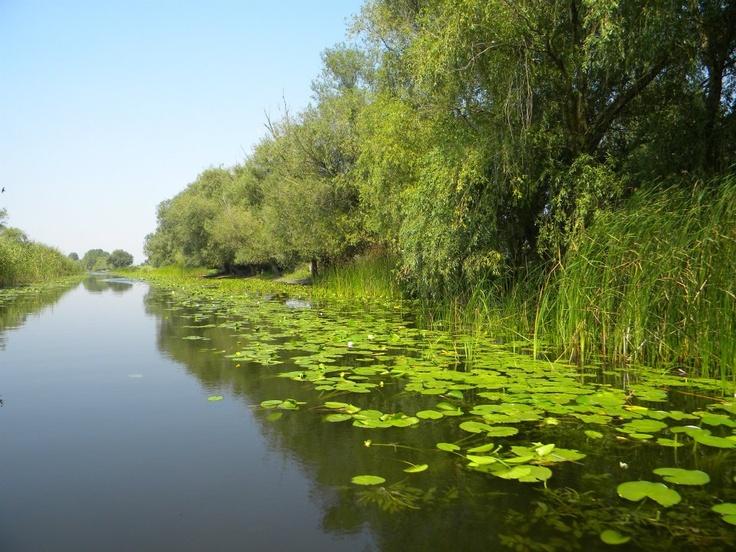 Danube Delta read