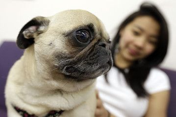 """College freshman suffering from separation anxiety, take heart: The federal government says universities have an obligation to admit """"emotional support"""" animals into school housing. Unlike service animals, which are trained to perform tasks to assist people with disabilities, emotional support animals (dogs, mostly) provide therapy through companionship and affection. Read more by clicking."""