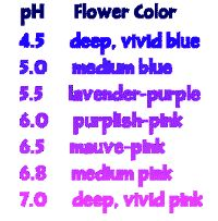 Hydrangea color chart respective to Hydrangea soil pH