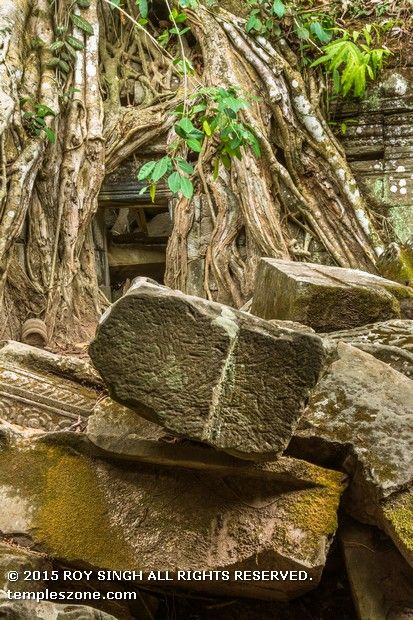 Unlike most Angkorian temples, Ta Prohm temple is in much the same condition in which it was found: the photogenic and atmospheric combination of trees growing out of the ruins have made it one of Angkor's most popular temples with visitors. UNESCO inscribed Ta Prohm on the World Heritage List in 1992.