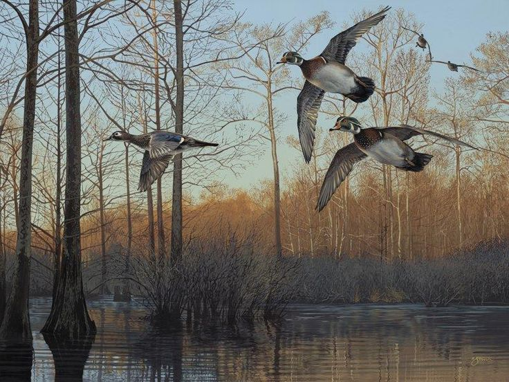"""""""Early Morning - Wood Ducks"""" -Waterfowl Paintings Waterfowl Paintings by Scot Storm - Waterfowl Paintings by Scot Storm"""
