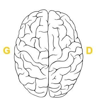Êtes-vous plutôt cerveau droit ou cerveau gauche ? Faites le test !
