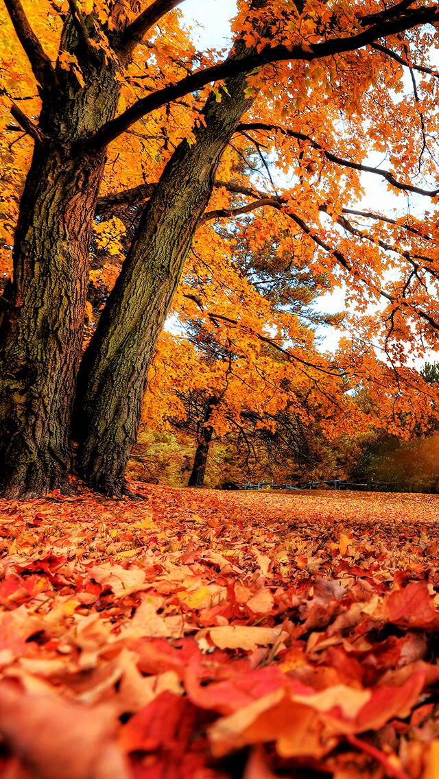 #Nature #Obtober