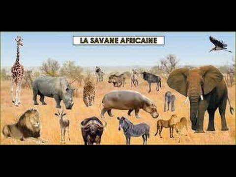 41 best les animaux de la savane images on pinterest - Animaux savane africaine ...