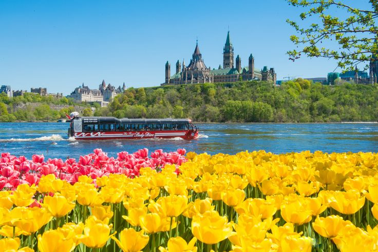The Canadian Tulip Festival is held every May in Ottawa, Canada. Image by Neil Robertson. For more information on Ottawa Festivals and Events visit www.ottawatourism.ca