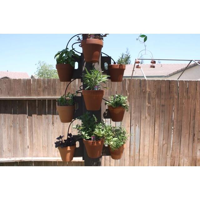 My Husbands Dog Proof Herb Garden.