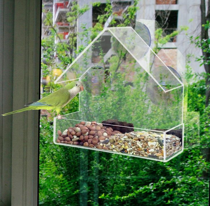 Window  bird feeders  CLEAR GLASS WINDOW VIEWING BIRD FEEDER HOTEL TABLE SEED PEANUT HANGING SUCTION // FREE Shipping //     Get it here ---> https://thepetscastle.com/window-bird-feeders-clear-glass-window-viewing-bird-feeder-hotel-table-seed-peanut-hanging-suction/    #cat #cats #kitten #kitty #kittens #animal #animals #ilovemycat #catoftheday #lovecats #furry  #sleeping #lovekittens #adorable #catlover