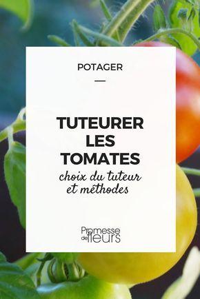 tomates au potager : comment les tuteurer ? Quel piquet choisir ? Comment les disposer ? Nos conseils ! #potager #tomate #tuteur