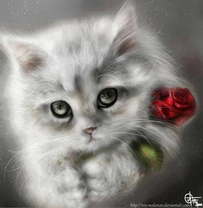 635 Best Kitten Heaven Images On Pinterest