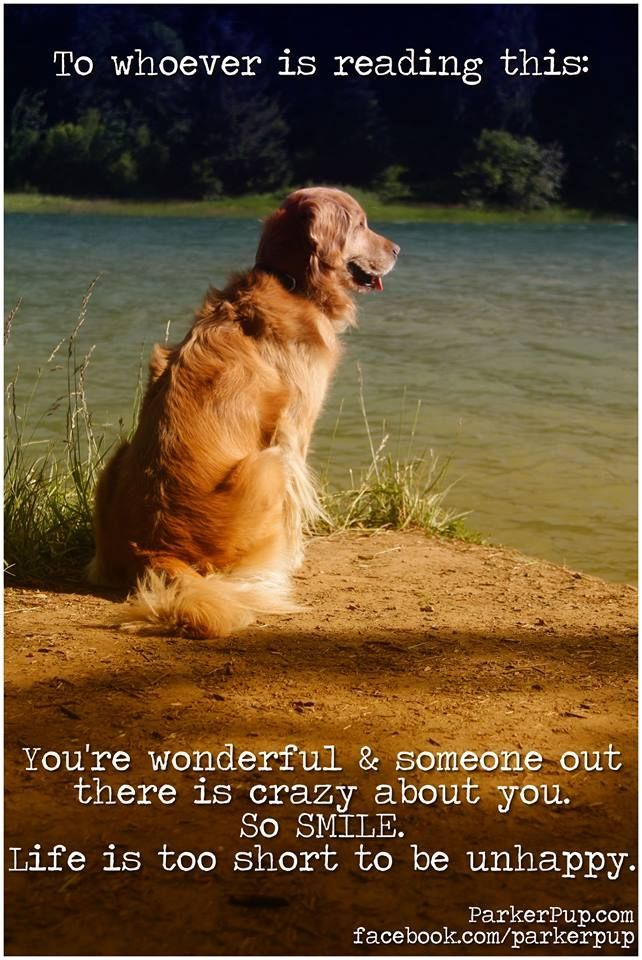 Something to inspire you today. You are beautiful. #dog #qoutes