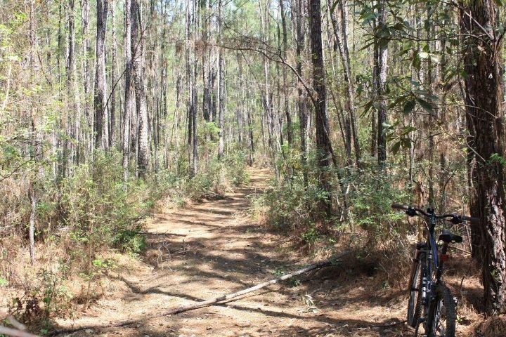 Swamp Fox Passage Mountain Bike Trail In Charleston South Carolina