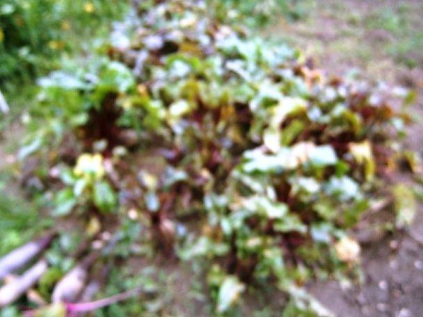 Zaváraná cvikla (fotorecept) - obrázok 1